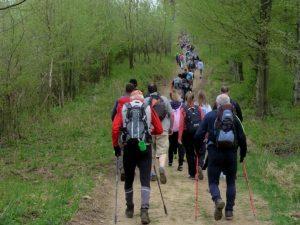 NORDIC WALKING – Land Art körút (1,5km)